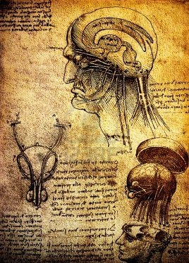 Leonardo Da Vinci's anatomical drawings of the brain