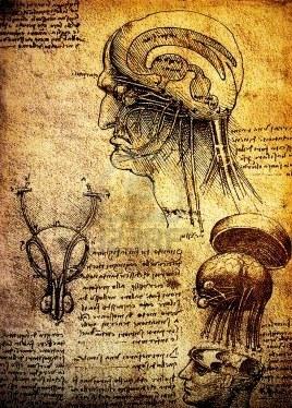 Leonardo Da Vinci's anatomical drawings of the brain