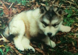 Soma as a little puppy